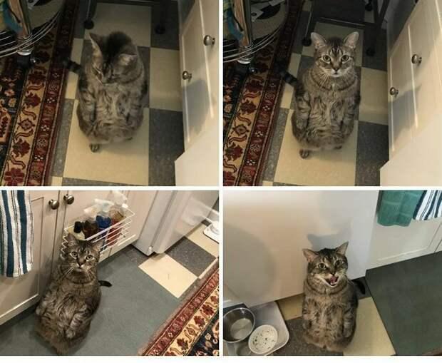 """2Вот так он выпрашивает у меня еду!"""" Посты, Социальные сети, домашние животные, животные, забавно, кошки, смешно, фотографии"""