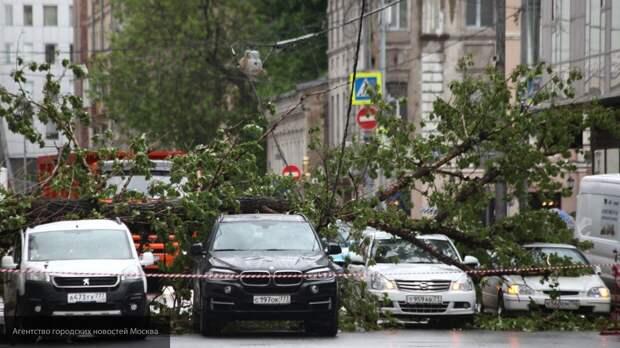 В Петербурге активно устраняют последствия шторма