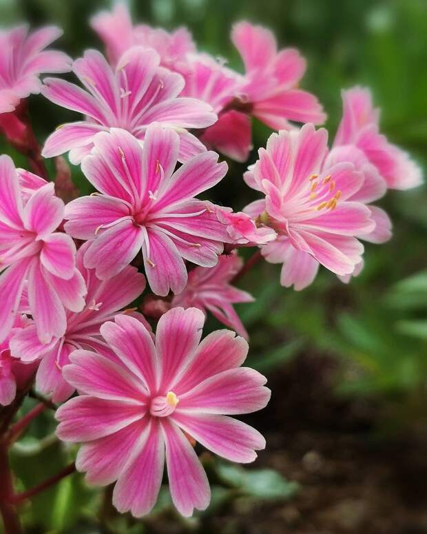 Красота цветов на снимках Кристины Войнович