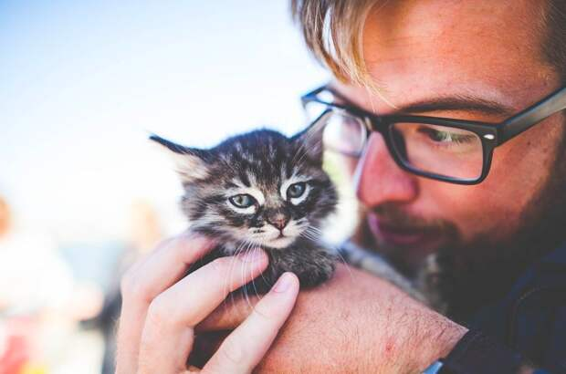Кошки помогут в лечении болезней почек у людей