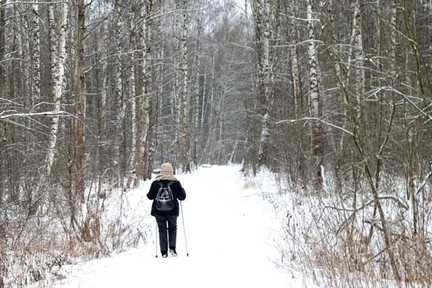 Две пожилые любительницы скандинавской ходьбы заблудились в лесу в Ижевске