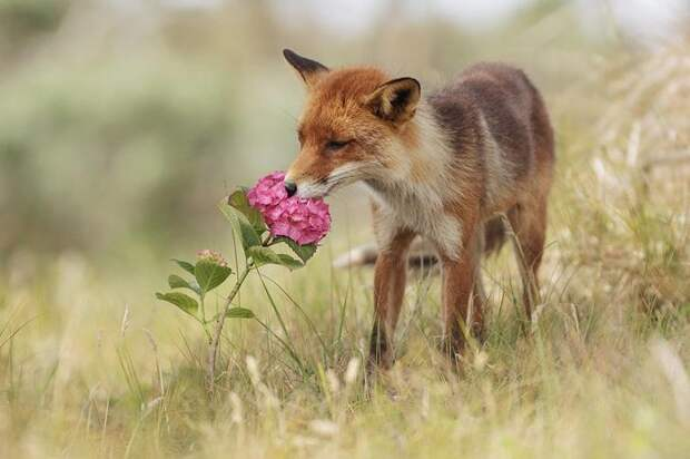Замечательные фотографии животных от Юлиана Рада животные, звери, природа, фото