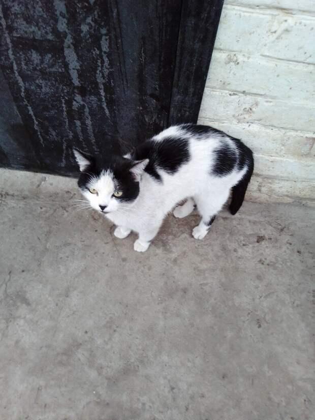 Мы долго не понимали, почему кот не уходит с речки, даже когда там нет людей. Узнали, когда пришли на рыбалку вечером