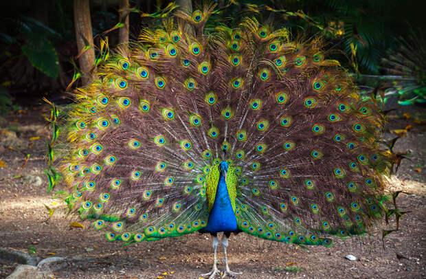 Почему у животных самцы выглядят ярче самок?