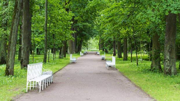 В Петербурге запретили посещение лесов до середины лета