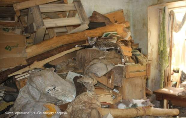Кошкин дом: соседи устроили в квартире приют для животных. Как бороться?