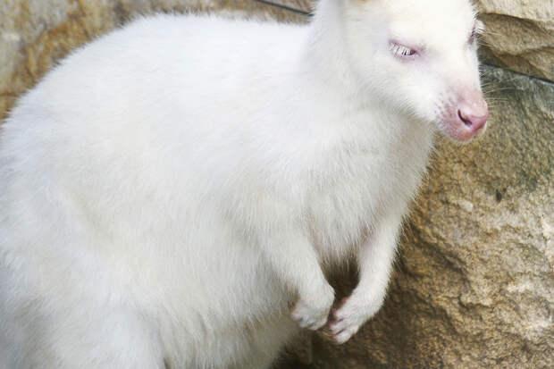 «Неизвестного науке» зверя-альбиноса нашли в лесу Приморья