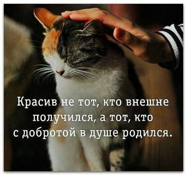 Доброта живёт не только в людях