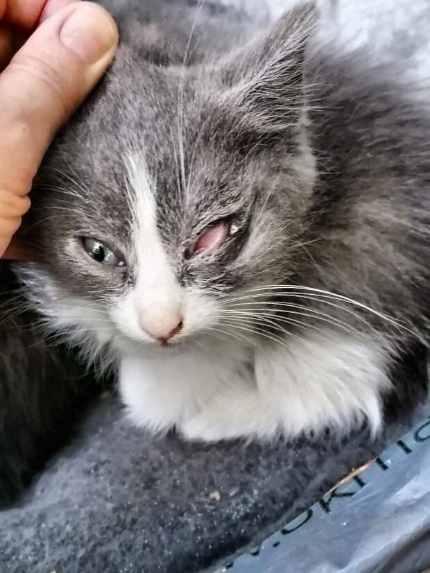 Откликнитесь! Помогите, пожалуйста! Ещё можно успеть помочь этим крохам, чтобы сохранить их жизнь и зрение!!!