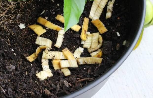 В банане полезна даже кожура / Фото: ok.ru