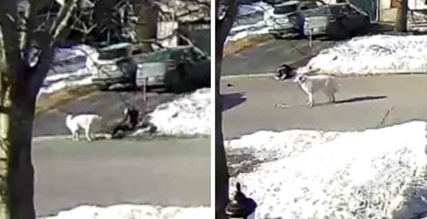 Преданная собака остановила движение, чтобы спасти жизнь своей хозяйке