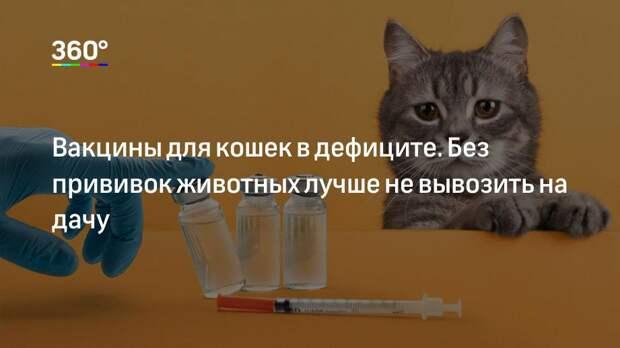 Вакцины для кошек в дефиците. Без прививок животных лучше не вывозить на дачу