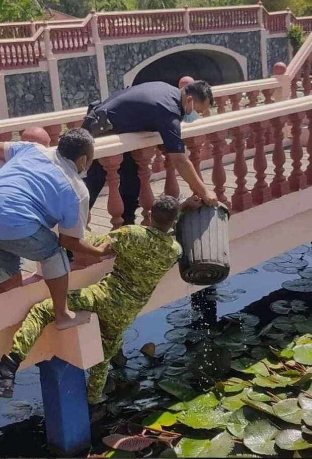 Прохожий, солдат и полицейский, при помощи ведра спасли кота