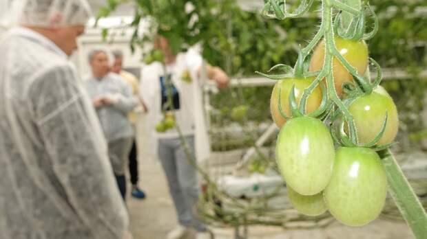 С начала года крымские аграрии собрали на 26% больше овощей закрытого грунта, чем весной 2020 года
