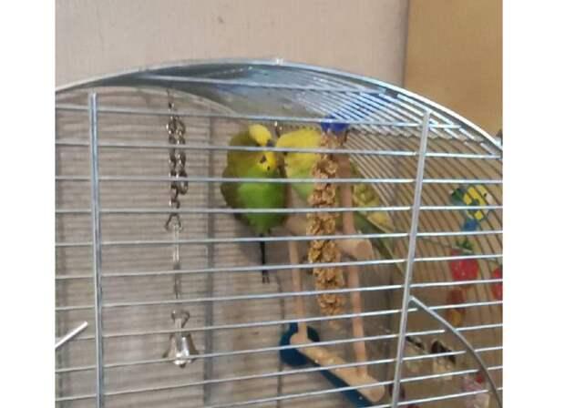 Попугай-беглянка Алиса из Капотни «отсиделась» в квартире соседей
