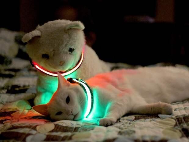 cathouse05 Дизайн для котов