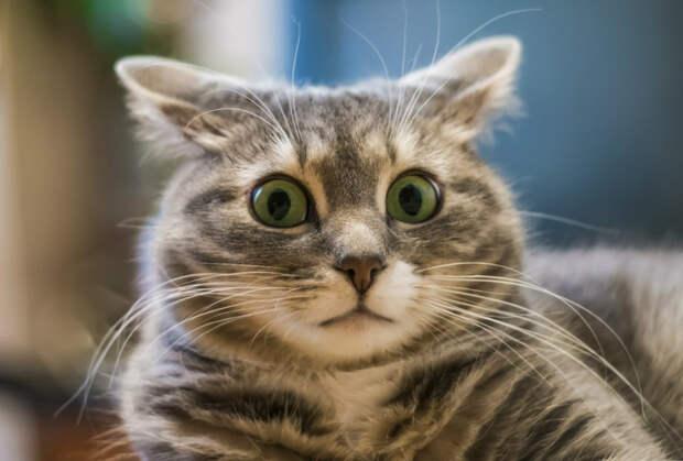 Как кошка помогает определить негативную энергетику
