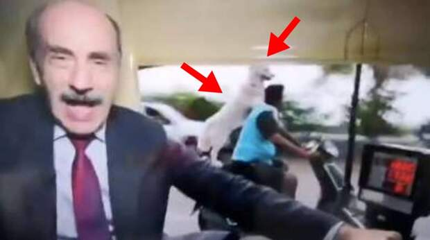 Журналист не видел, что творится позади него! А там собака ехала на скутере, цепляясь за хозяина лапами