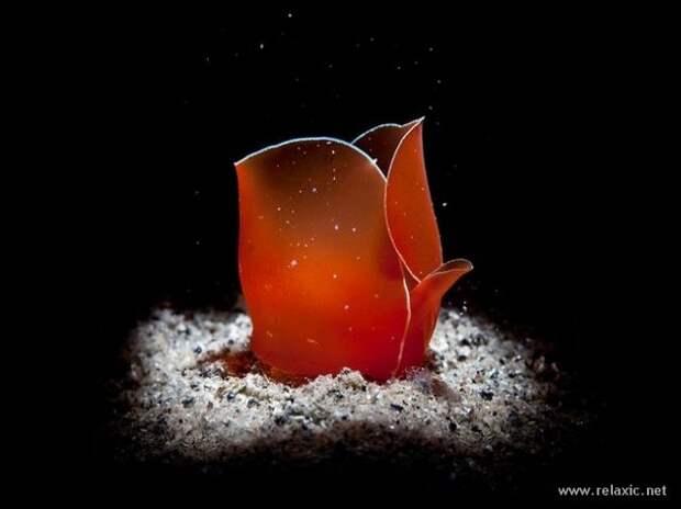 underwater_053