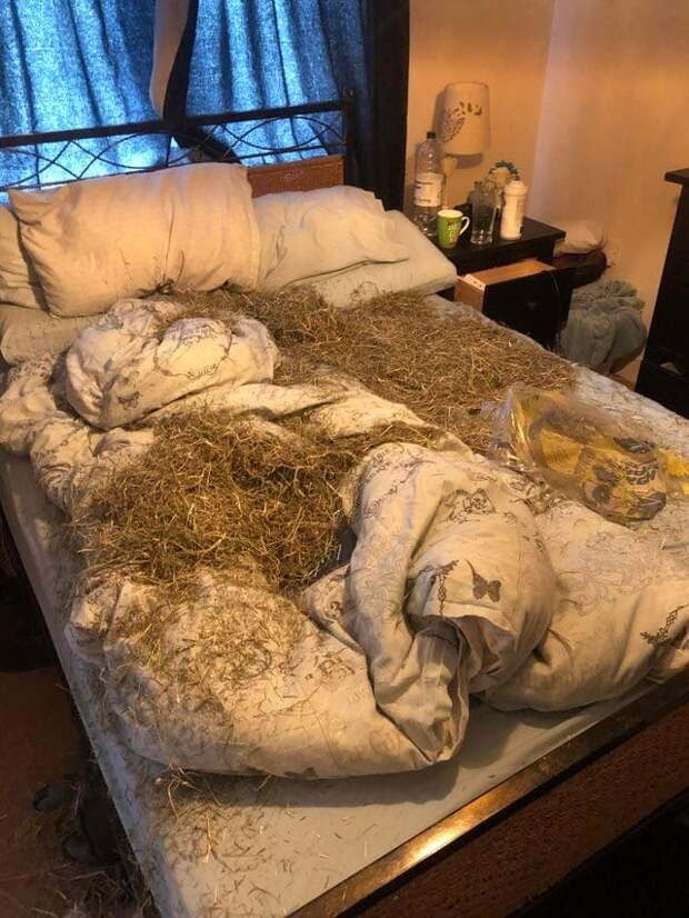 18 примеров бесстыжего выселения хозяев из их же кроватей домашними питомцами