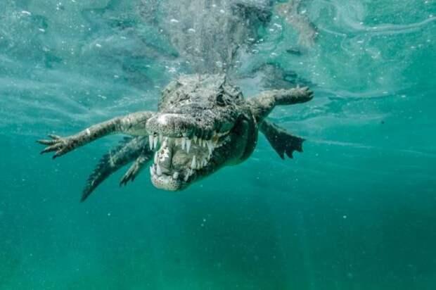 Подводные встречи с крокодилами