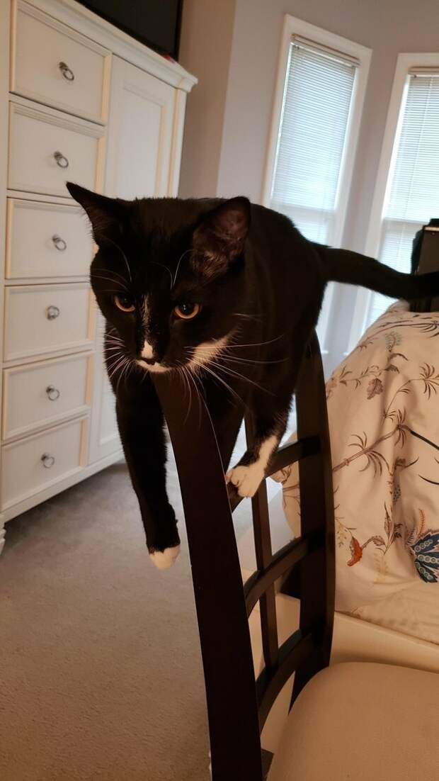 7. Монорельсовый кот Любовь, животные, коты, кошки, люди, милота, питомцы