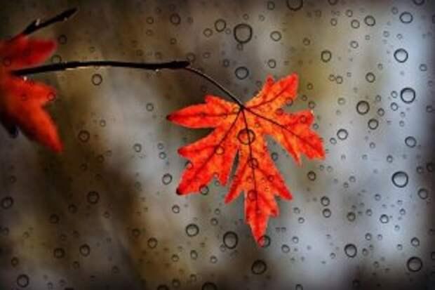Погода на 25 сентября: и вновь дождь