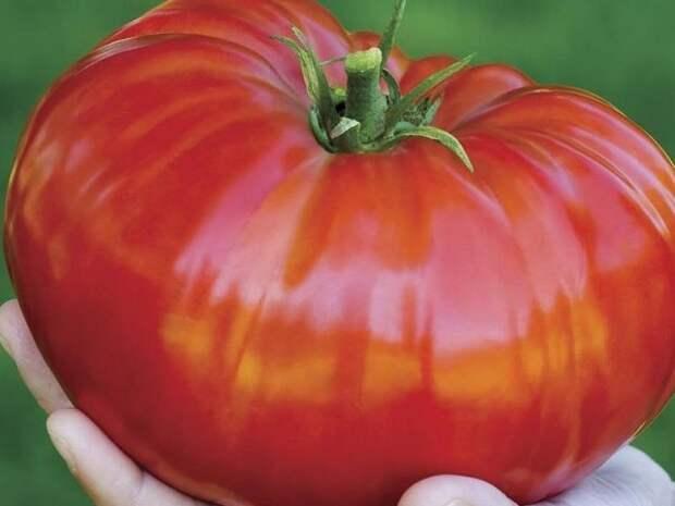 Что бы томаты были вкусными и крупными
