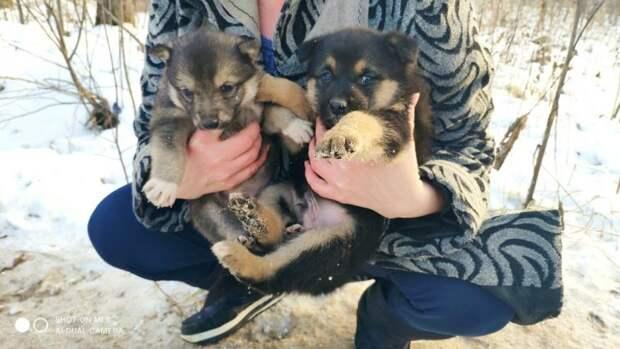 Бездомная собака вывела щенков из норы , целых пять маленьких карапузов