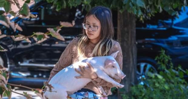 В Днепре гостья из США держала в съемной квартире теленка и поросенка