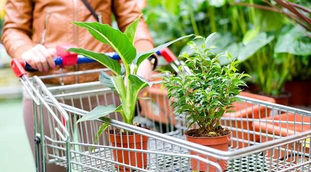 Мошенники на рынке: несуществующие растения – не покупаем!
