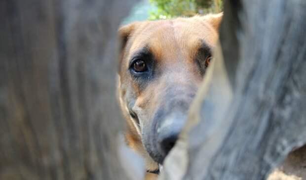 Житель Карелии умер после того, как его поцарапала собака
