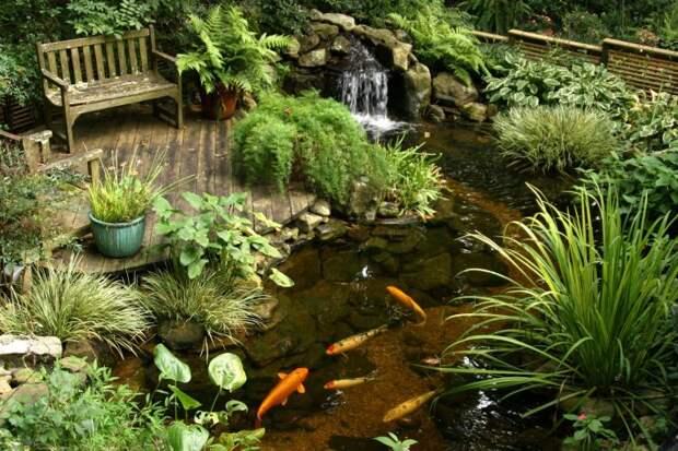 Водоемы в саду и на даче: обустройство и посадки вокруг