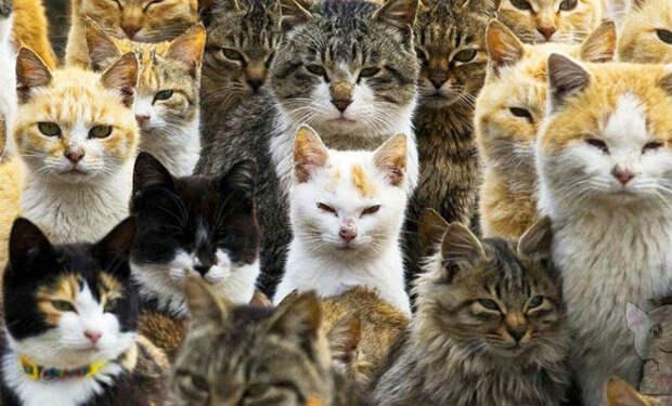 170 лет назад с корабля на остров сбежали 2 кошки — сейчас кроме них на острове никого нет