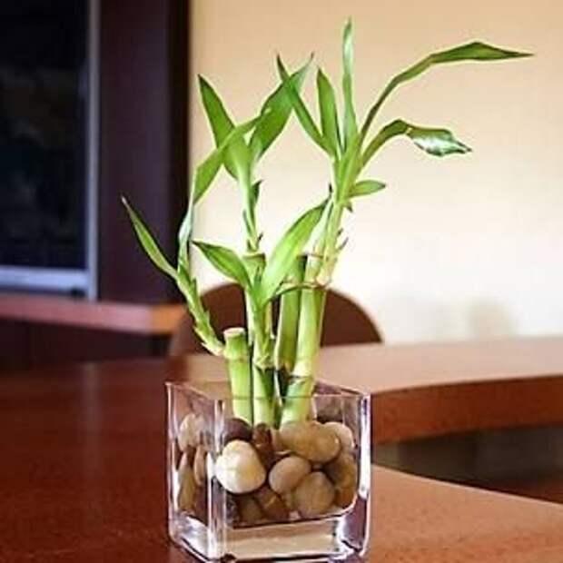 8 комнатных растений, которые растут без почвы