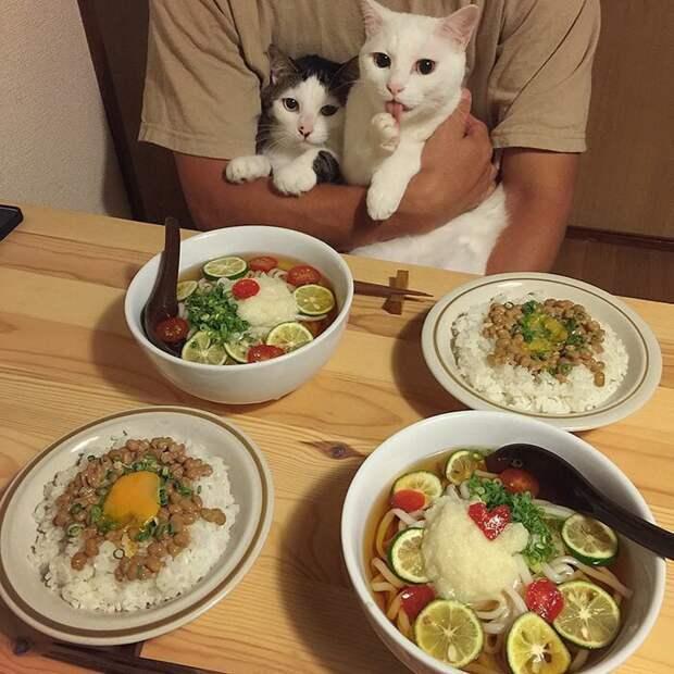 С немытыми лапами за стол «не содют»! дегустация, еда, животные, кот, коты, позитив, реакция, юмор