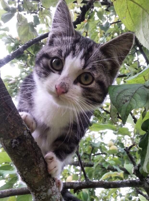 В понедельник люди окончательно уезжают с дачи, и котёнок остаётся один!!!