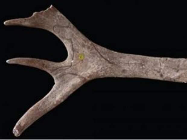 Найден древнейший образец первобытного искусства
