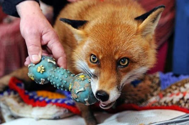 Удивительная история из мира животных