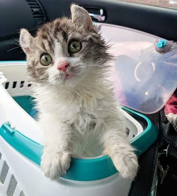 Котенок в корзине