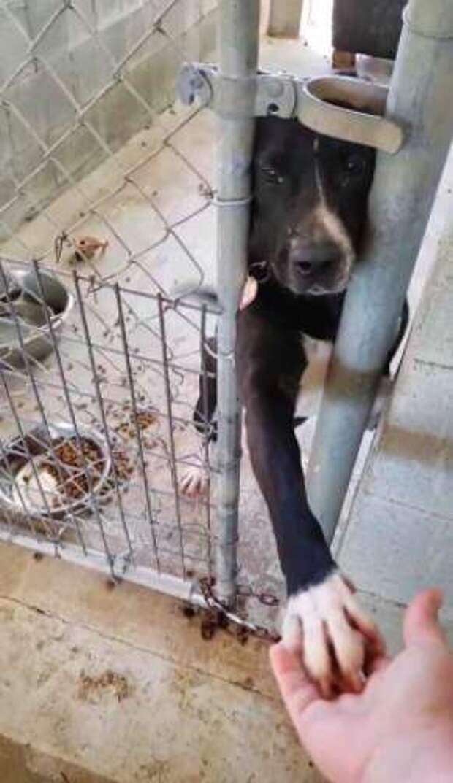 Пёс протягивал лапу через прутья клетки, чтобы лишь дотронуться до человека