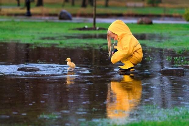 Жёлтый найдёныш — уточка Капелька (реальная история)