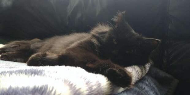 Бездомная кошка не капельки не сомневалась, кому доверить своих котят
