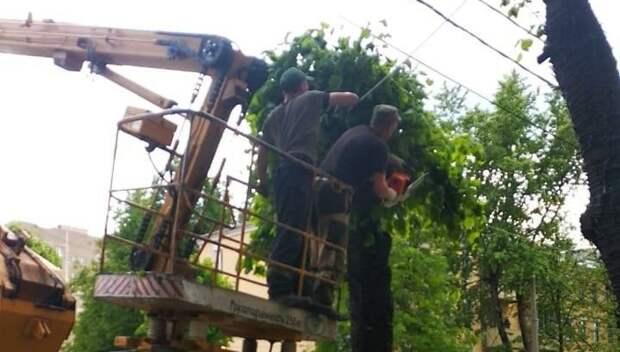 Коммунальщики провели опиловку веток у аварийных деревьев в Подольске