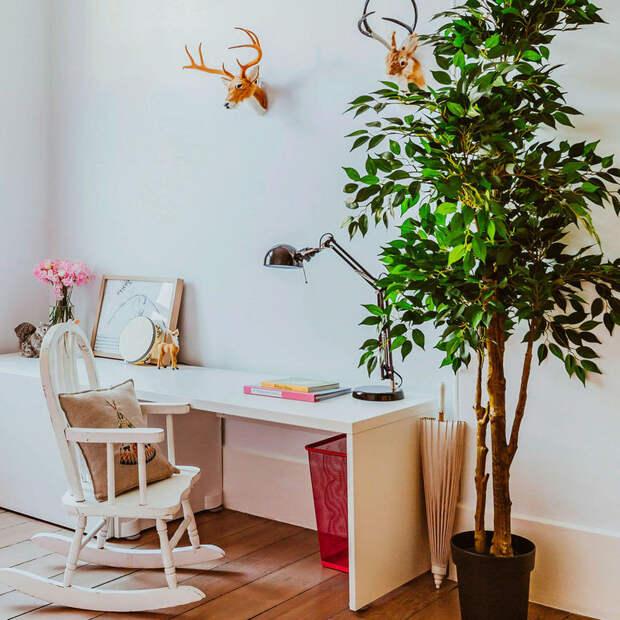 Топ-9 комнатных растений, которые увлажняют и очищают воздух в доме