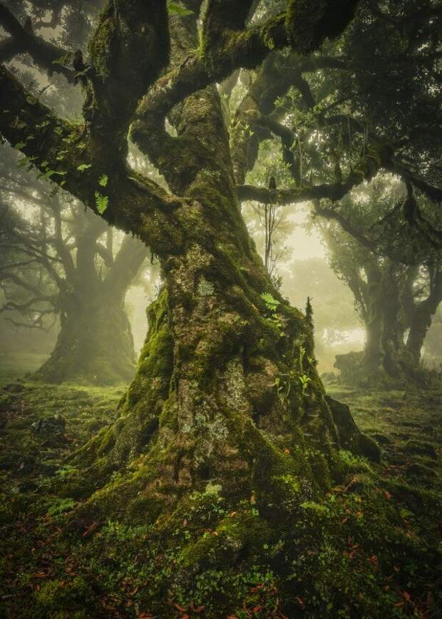 Фотография —  победитель премии Lone Tree Award