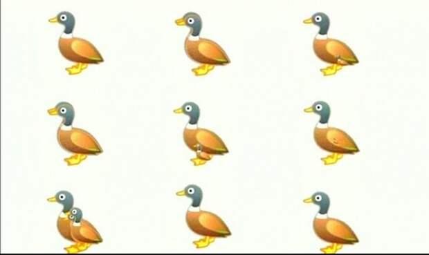 9 уток на этой картинке видят все: рассмотреть 16 может не каждый (головоломка)