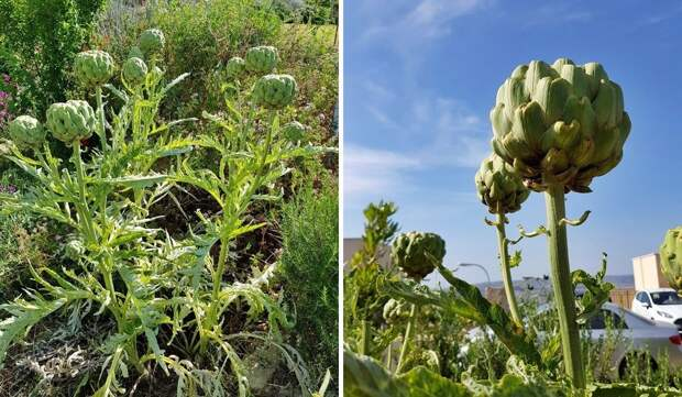 Сделано в Италии: что выращивают средиземноморские фермеры