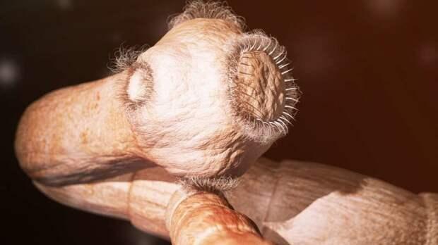 История одного любителя суши, который извлёк из своего организма длиннющего паразита