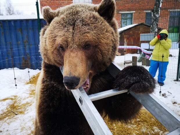 В Дагомысе медведи из вольера загрызли ребенка, а в Таиланде голодные обезъяны захватили город
